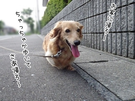 kinako7850.jpg