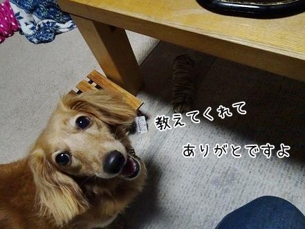 kinako7870.jpg