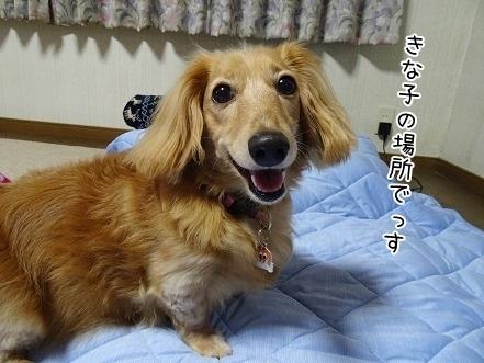 kinako7890.jpg