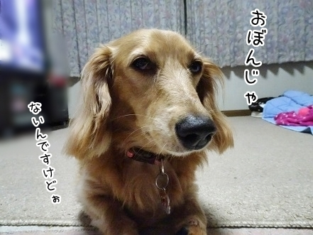 kinako7895.jpg