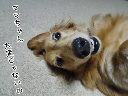 kinako7911.jpg