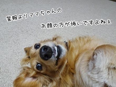 kinako7914.jpg