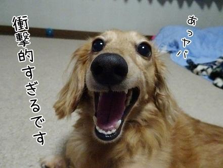 kinako7926.jpg