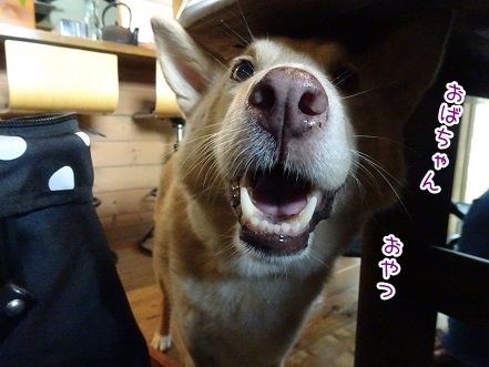 kinako7942.jpg
