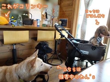 kinako7945.jpg