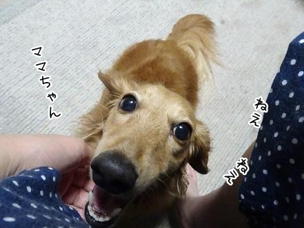kinako7959.jpg
