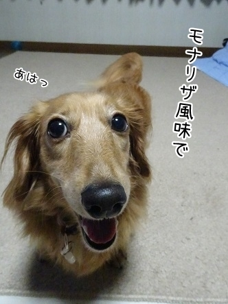 kinako7966.jpg