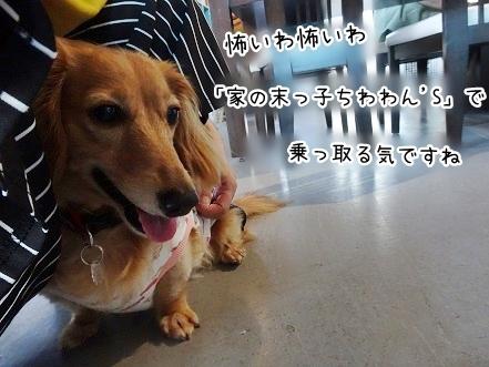 kinako7978.jpg