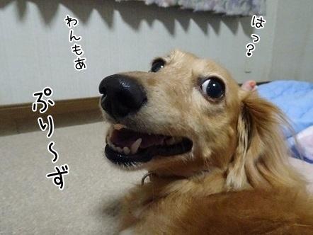 kinako8004.jpg