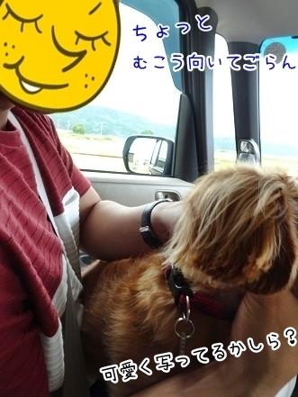 kinako8009.jpg
