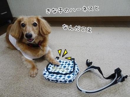kinako8026.jpg