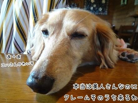 kinako8058.jpg