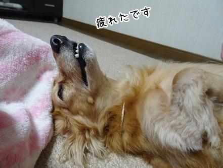 kinako8068.jpg
