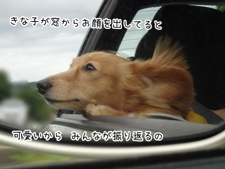 kinako8074.jpg