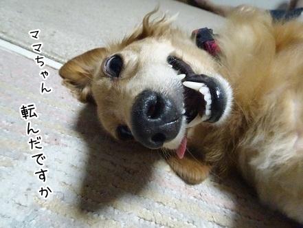 kinako8077.jpg