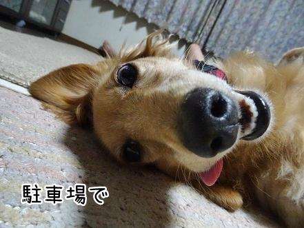 kinako8078.jpg