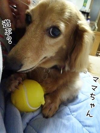 kinako8087.jpg