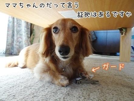 kinako8103.jpg