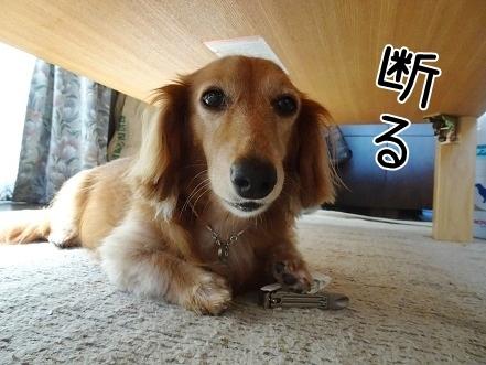 kinako8104.jpg