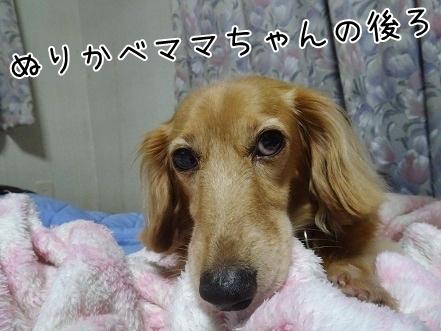 kinako8110.jpg
