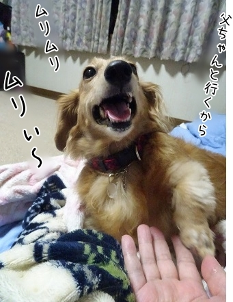 kinako8112.jpg