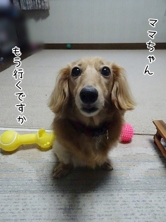 kinako8114.jpg