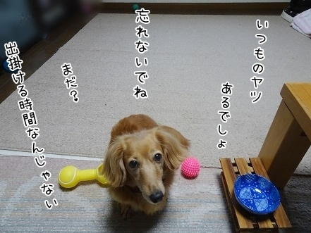 kinako8116.jpg