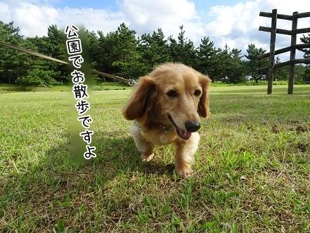 kinako8134.jpg