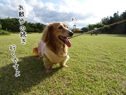 kinako8136.jpg