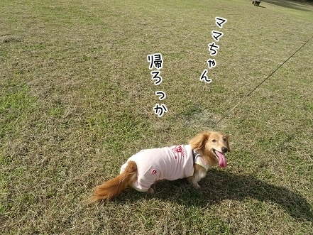 kinako8138.jpg