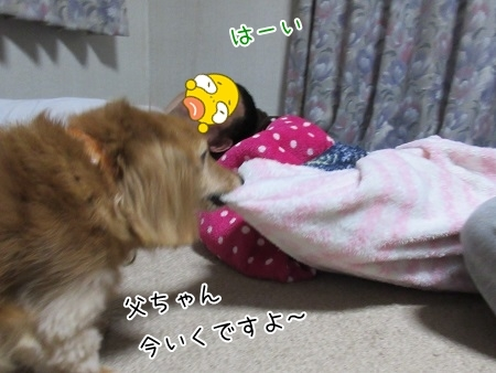 kinako8182.jpg