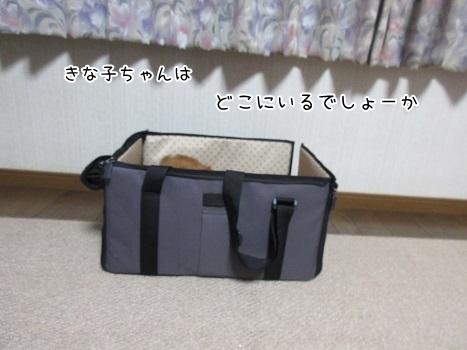 kinako8199.jpg