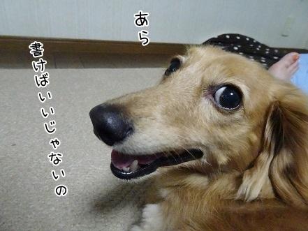 kinako8203.jpg