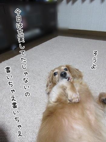 kinako8204.jpg