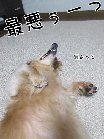 kinako8205.jpg