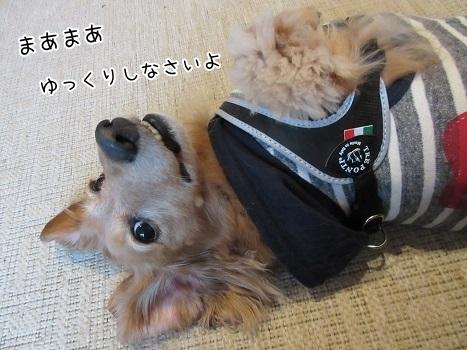 kinako8209.jpg