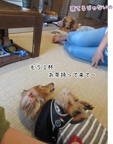 kinako8210.jpg