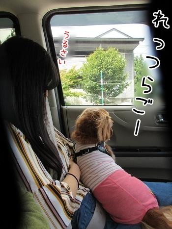 kinako8221.jpg