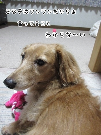 kinako8236.jpg