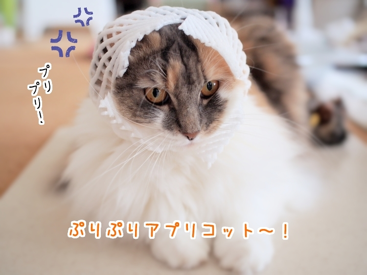 P7120034_1.jpg