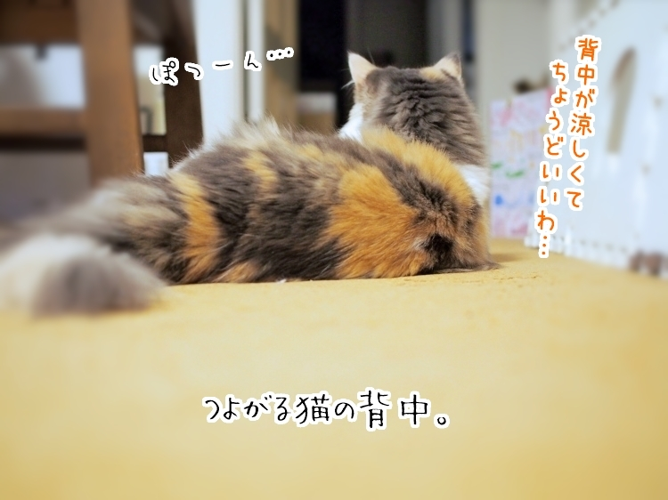 P8230028_0.jpg