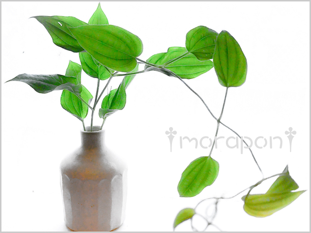 170727 瑠璃玉薊と利休草-2