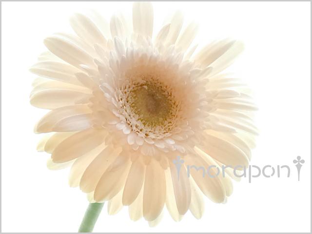 170727 瑠璃玉薊と利休草-3
