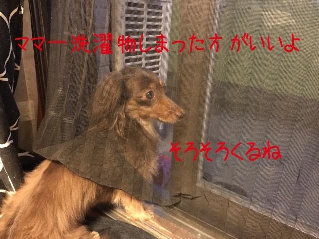 20170704193649046.jpg