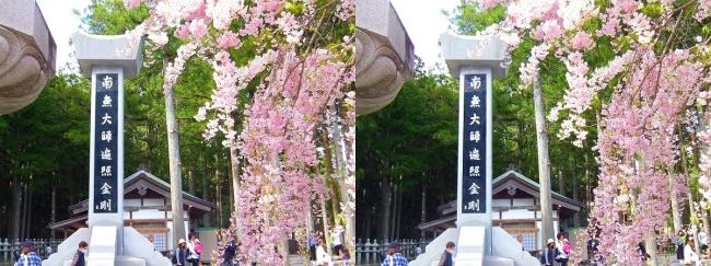 奥之院裏参道⑥ 中の橋入口・垂れ桜(平行法)