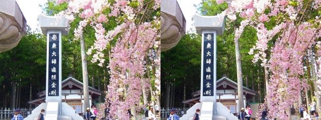 奥之院裏参道⑥ 中の橋入口・垂れ桜(交差法)