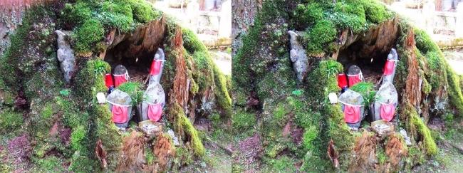 奥之院参道⑥ 苔生した老杉と地蔵尊(平行法)