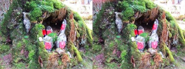 奥之院参道⑥ 苔生した老杉と地蔵尊(交差法)