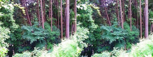 矢田丘陵②(平行法)