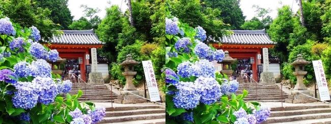 矢田寺(金剛山寺)山門(平行法)